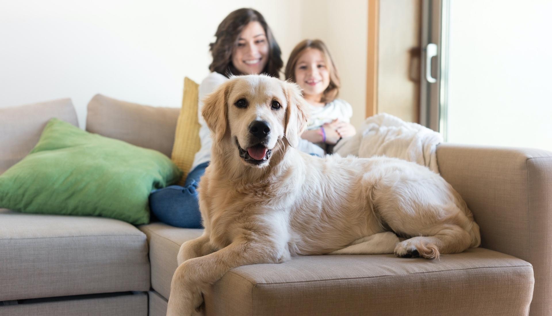 family-with-dog-bg